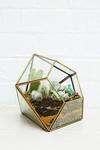 Terrarium-Blumentopf