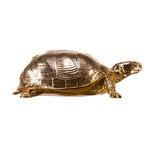 Turtle Box, gold