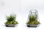 Glas-Terrarium