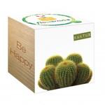Flowercube Kaktus