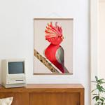 Galah Cockatoo + Posterleiste 50 cm