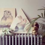 Print Faunascape Rabbit