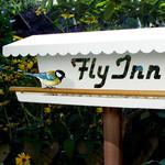 Vogelrestaurant Fly Inn