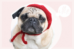 All you need is pug shop bei etsy