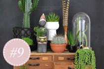 Buch Wohnen in Grün von Igor Josifovic und Judith de Graaff mit Einrichtungstipps, Dekoideen und DIY Tipps zu Pflanzen