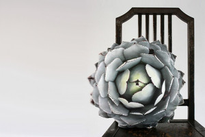 Kissen mit Fotoprint aus Natur und Pflanzen von Plantillo über Etsy online bestellen, Sukkulente