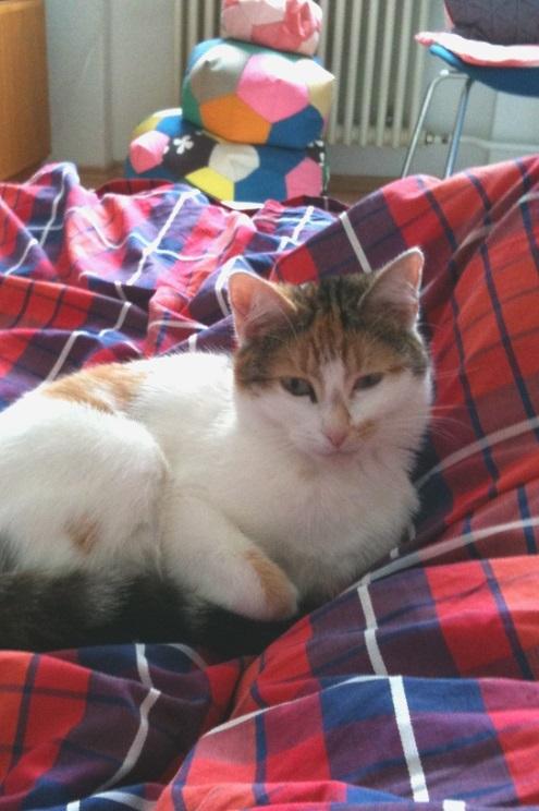 Katze auf Bett mit Karo Bettwäsche