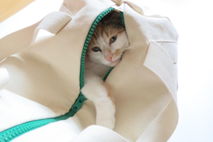 Tasche von KSIA mit Katze