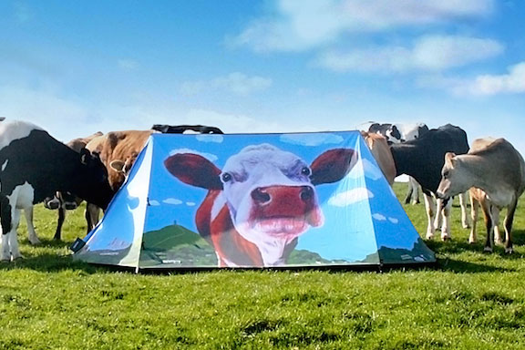 Zeltwand von Field Candy mit Kuh-Motiv