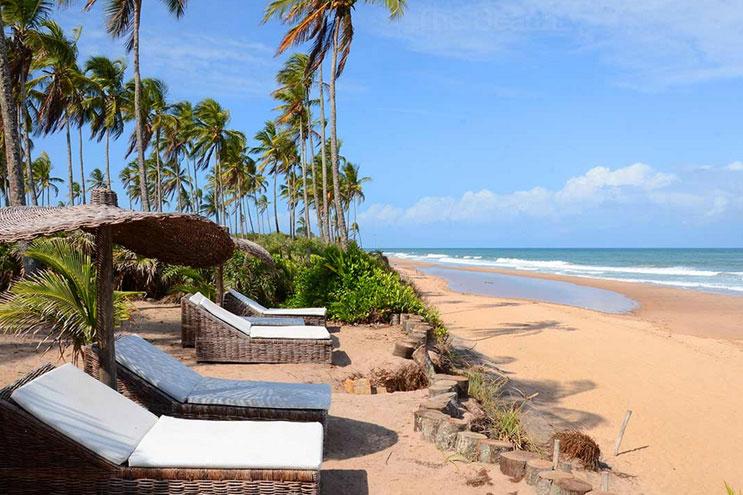 Strände mit Palmen in Brasilien