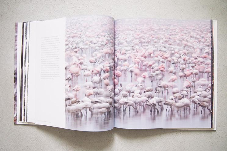Bildband TIERREICH von Fotograf Ingo Arndt in Kooperation mit dem norwegischen Modelabel Holzweiler, Flamingos auf Seidenschals, Drucke, Prints, Seide