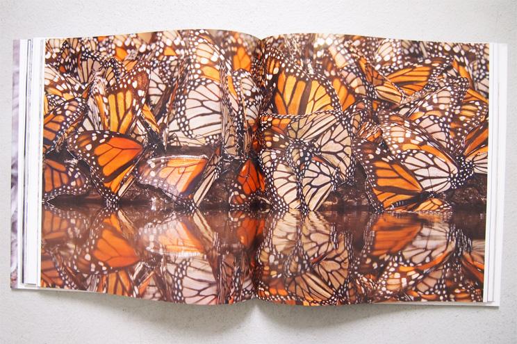 Schmetterlinge aus dem Bildband Tierreich von Tierfotograf Ingo Arndt