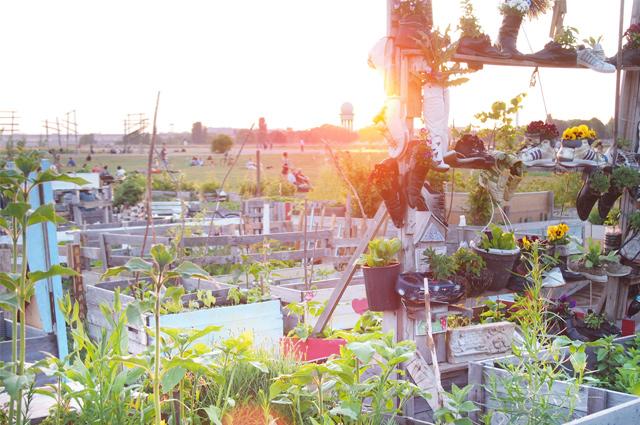 Urban Gardening auf dem Tempelhofer Flugfeld in Berlin bei Sonnenuntergang